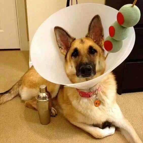 Martini Dog Costume