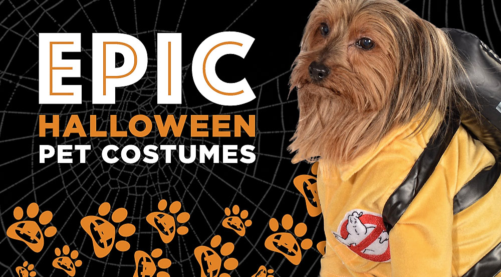 12 Epic Pet Halloween Costumes